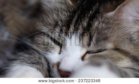 Big sad red cat lying on the windowsill. Clip. Close up sad cat lying at home. poster