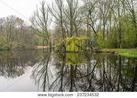 Picturesque Image Of Bare And Green Budding Trees Reflected In The Mirror Smooth Water Surface Of A