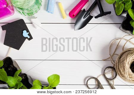 Young Sprouts, Shoot, Seedling, Sapling In A Wooden Box With Topper And Garden Tools. Flat Lay With