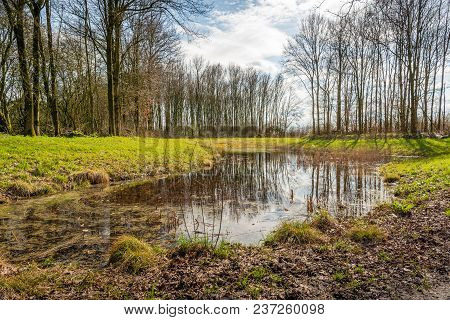 Backlight Image Of A Small Puddle In A Dutch Nature Reserve. The Still Largely Bare Trees Are Reflec