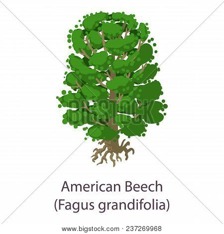 American Beech Icon. Flat Illustration Of American Beech Vector Icon For Web