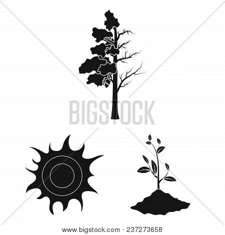 Bio And Ecology Black Icons In Set Collection For Design. An Ecologically Pure Product Vector Symbol