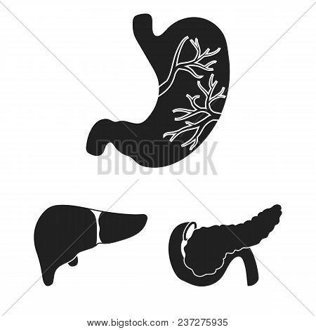 Internal Organs Of A Human Black Icons In Set Collection For Design. Anatomy And Medicine Vector Sym