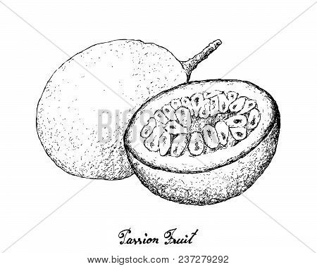 Tropical Fruits, Illustration Hand Drawn Sketch Of Passion Fruit Or Passiflora Edulis Isolated On A