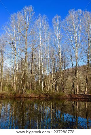 Scenic Landscape Of Bare Trees Reflected In A Pond In Spring.