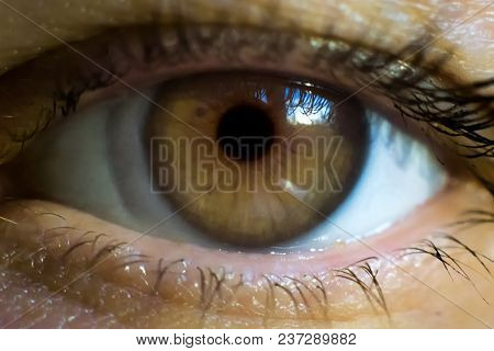 Macro Image Of Human Eye With Contact Lens