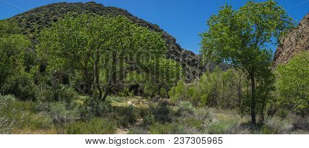 Wooded Panorama Of Southern California Valley