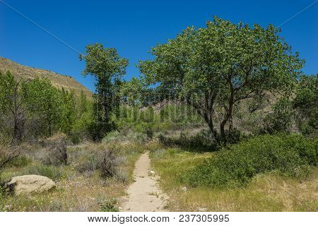 Wooded Southern California Walking Trail