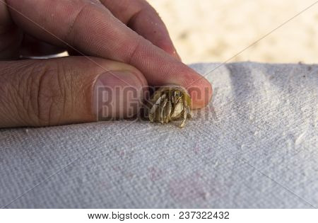 Small Hermit Crab In Hand, , Hand, Small