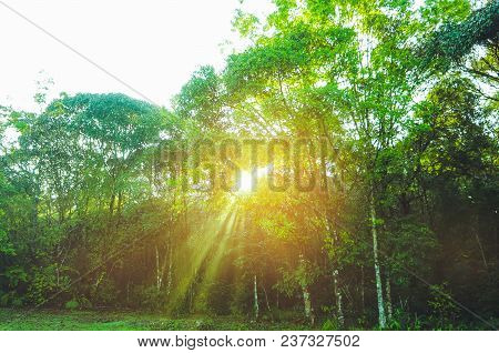 Landscape Of Fresh Green Foliage With The Sun Casting Its Rays Of Light Through Trees. Beautiful Nat