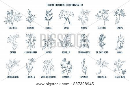 Best Medicinal Herbs For Fibromyalgia. Hand Drawn Vector Set Of Medicinal Plants
