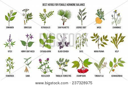 Best Herbs For Female Hormone Balance. Hand Drawn Vector Set Of Medicinal Plants
