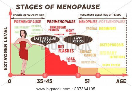 Stages and symptoms of menopause. Estrogen level average percentage from the birth to the age of eighty years. Medical infographic useful for an educational poster graphic design. Vector illustration. poster