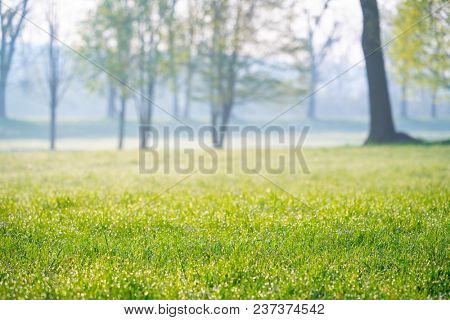 green park at morning, urban park with landscaped grass,