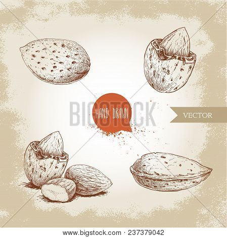 Hand Drawn Sketch Style Almond Set. Single, Group  Seeds And Almond In Nutshell. Organic Food Vector