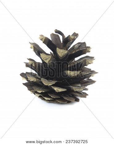 Dry Disclosed Pine Cone Closeup On White