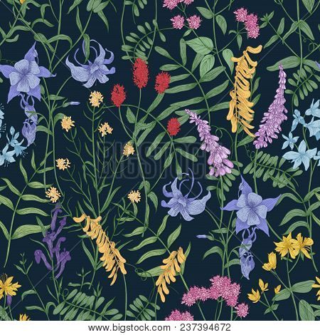 Natural Seamless Pattern With Wild Blooming Flowers And Flowering Herbaceous Plants On Black Backgro