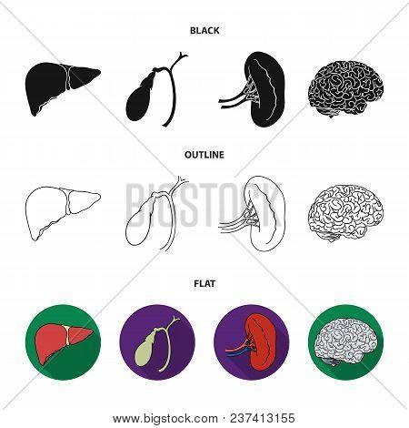 Liver, Gallbladder, Kidney, Brain. Human Organs Set Collection Icons In Black, Flat, Outline Style V