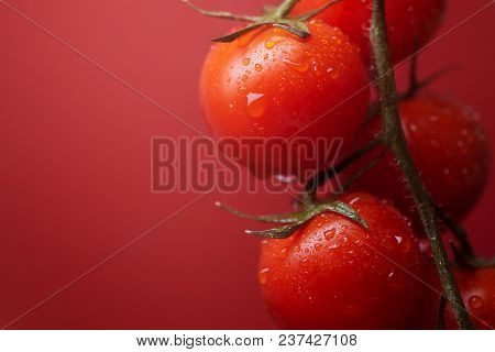 Tasty Red Vegan Cherry Tomatoes On The Bushes And Red Background.