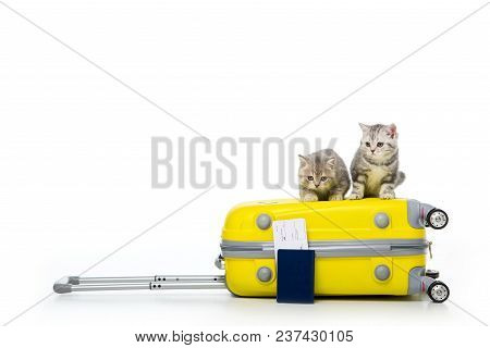 Adorable Kittens Sitting On Suitcase And Passport With Ticket Isolated On White