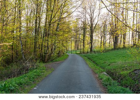 Forest Spring Landscape - Row Of Pine Spring Forest Trees And Narrow Path Lit By Soft Spring Sunligh