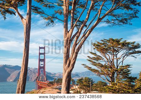 Classic View Of Famous Golden Gate Bridge Framed By Old Cypress Trees At Scenic Presidio Park On A B