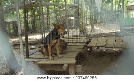 Dogs in the nursery on the island of Fukuok in Vietnam. Dog Fukuok. A dog in a dog kennel. Dog phu quoc poster