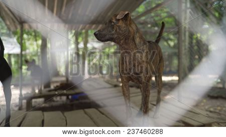 Dogs In The Nursery On The Island Of Fukuok In Vietnam. Dog Fukuok. A Dog In A Dog Kennel. Dog Phu Q