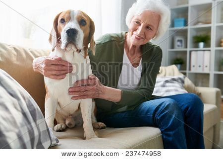 Happy Cheerful Senior Woman With Gray Hair Hugging Faithful Beagle Dog While Sitting On Comfortable