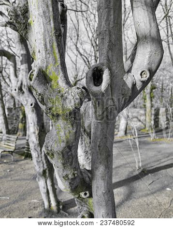 Various Extraordinary Tree Shapes And Trunk Growth Forms, Photos Of The Black White Colored Collecti