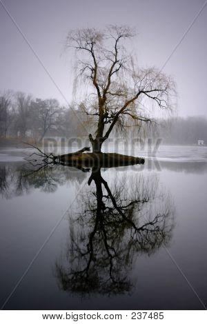 Tree Tall Reflection