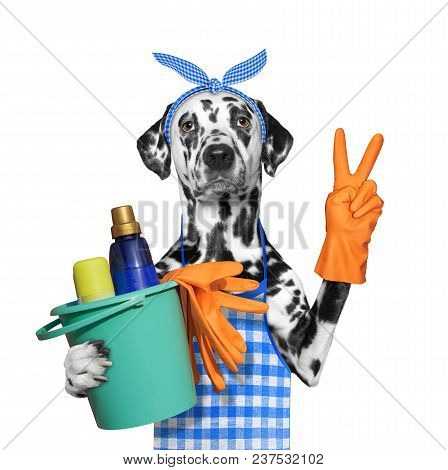 Dalmatian Dog In Apron Doing Household Chores. Isolated On White Background