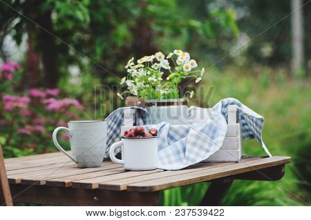 June Or July Garden Scene With Fresh Picked Organic Wild Strawberry And Chamomile Flowers On Wooden