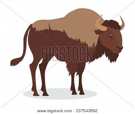 American Bison Cartoon Character. Large Bison Male Flat Vector Isolated On White. North America Faun