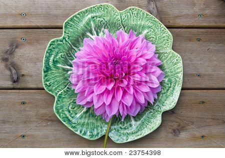 Giant dahlia flower on a plate