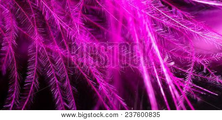 Pink Feather As An Abstract Background. Macro