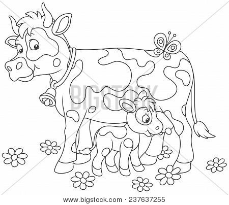 Smiling Spotted Cow And Her Small Calf Drinking Milk, Black And White Vector Illustrations In A Cart