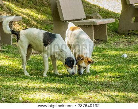 The Innocence Of Two Curious Dogs In The Park
