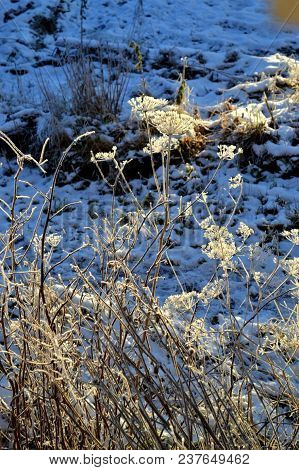 Dry Grass Covered With Snow. Late Autumn
