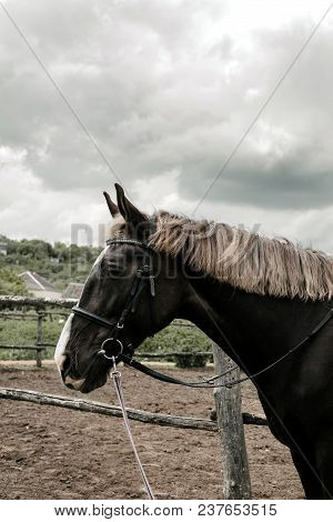 Horse Profile At Farm Fence. Portrait Of Brown Horse In Paddock With Cloudy Sky. Horse On Nature. Ri