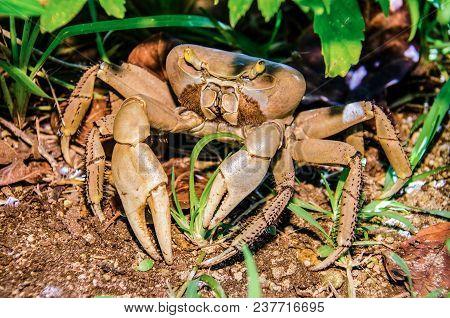 Crustacean Close Up Walking In The Asphalt Of A Resort