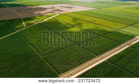 Ideal Flat Fields. Green And Lines. Road. Square Blocks