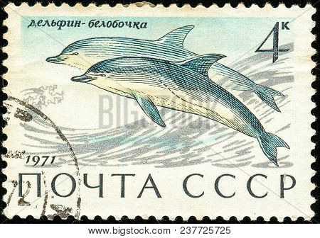 Ukraine - Circa 2018: A Postage Stamp Printed In Ussr Show Short-beaked Common Dolphin Or Delphinus