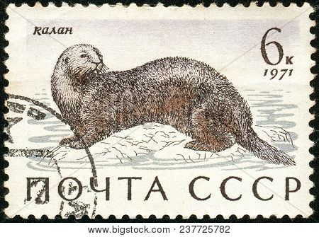 Ukraine - Circa 2018: A Postage Stamp Printed In Ussr Show Sea Otter Or Enhydra Lutris. Series: Mari