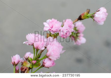 A Small Apple Tree Flower In The Daylight