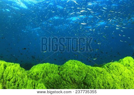 Green algae blue ocean and fish
