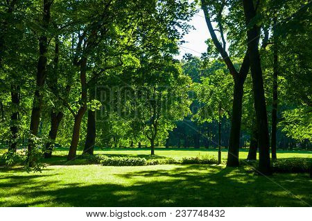 Summer Landscape - Summer City Park With Deciduous Green Trees In Sunny Weather. Colorful Sunny Summ