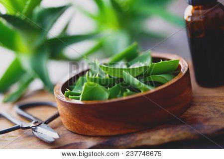 aloe vera on dark background - alternative medicine