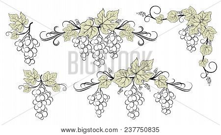 Set Of Plant Pictograms, Grape Berries And Leaves, Black Contour On White Background. Vector