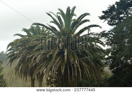 Palm Tree In The Vicinity Of Butron Castle, Castle Built In The Middle Ages. Architecture History Tr
